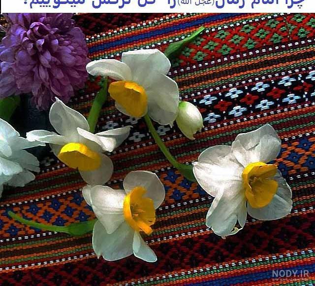 عکس گل امام زمان