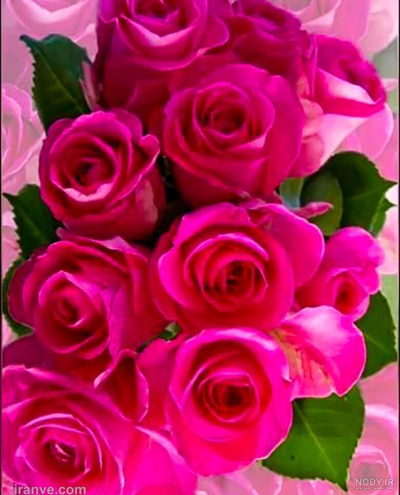 عکس گل صورتی برای پروفایل