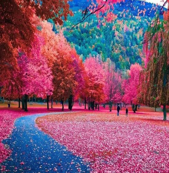 رویایی ترین عکس طبیعت