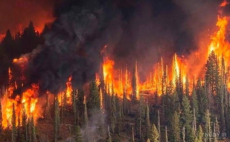 عکس آتش در جنگل