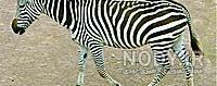 عکس حیوانات چهارپا