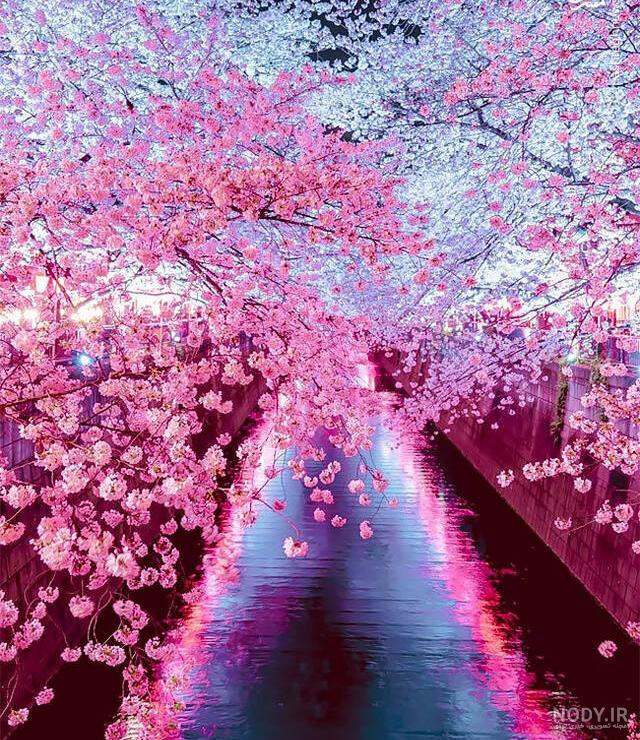 عکس بهار زیبایی