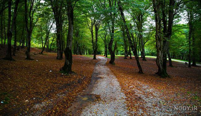 عکس زیبا از طبیعت مازندران