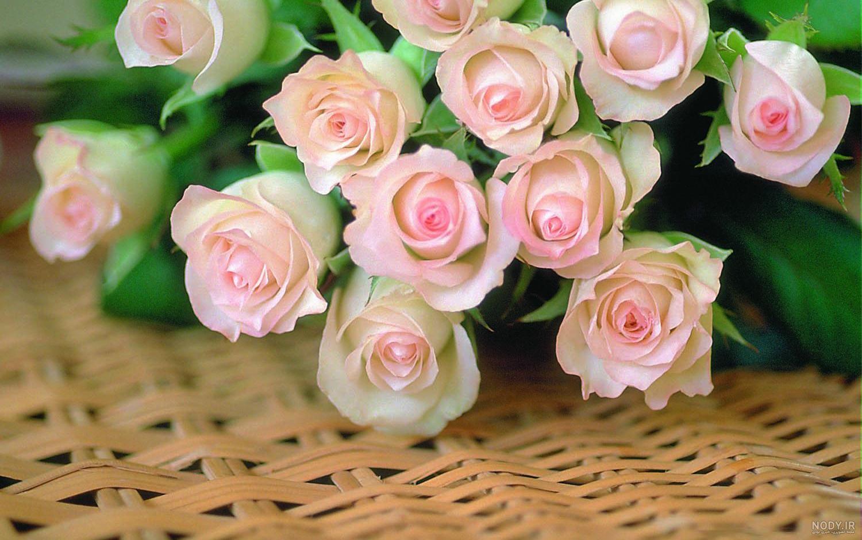 عکس زیبا از طبیعت گل