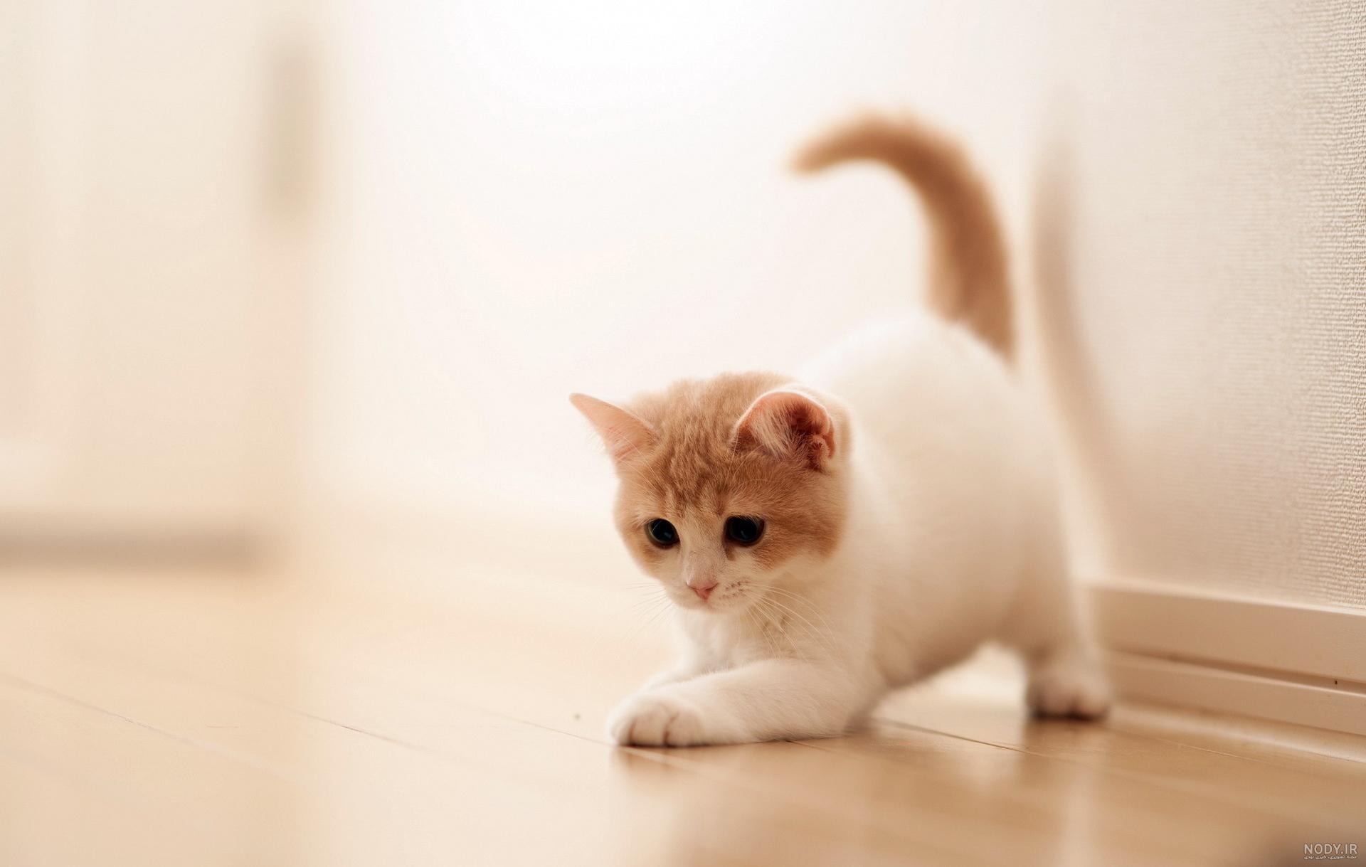 عکس صفحه گوشی گربه
