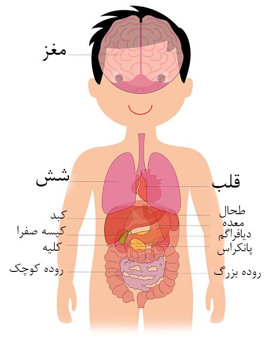 عکس آناتومی بدن برای کودکان