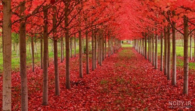 عکس از یک طبیعت زیبا