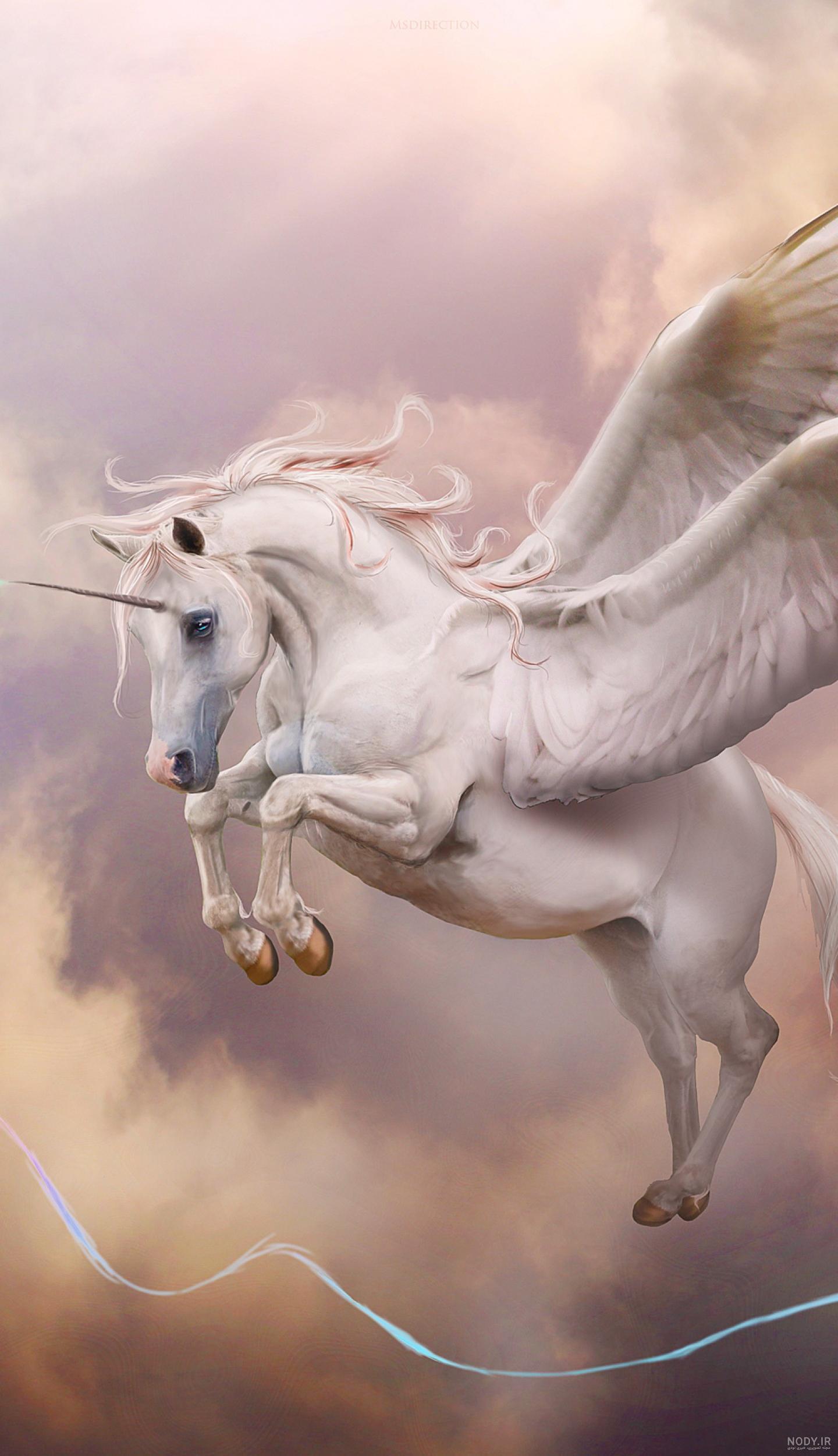 عکس اسب سفید تک شاخ