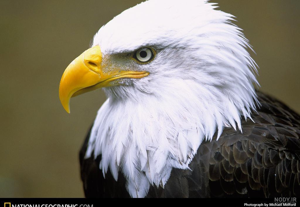 خطرناک ترین عقاب جهان