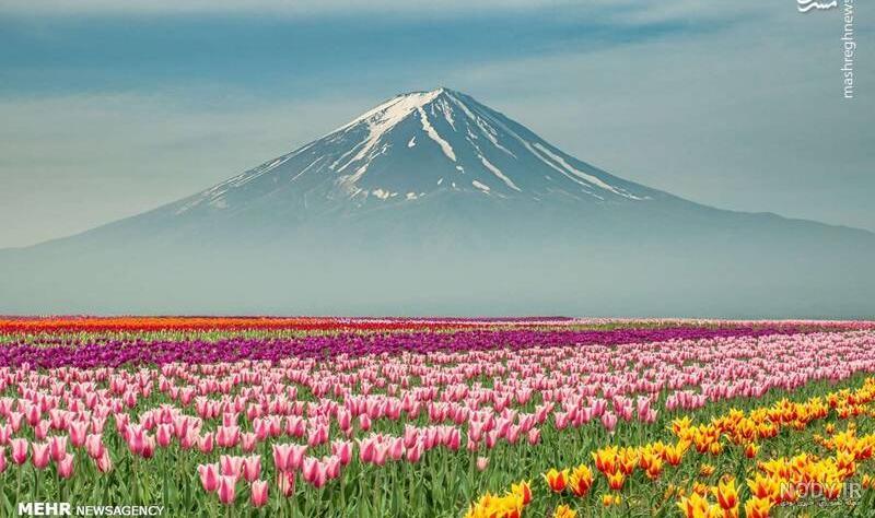عکس بهاری طبیعی