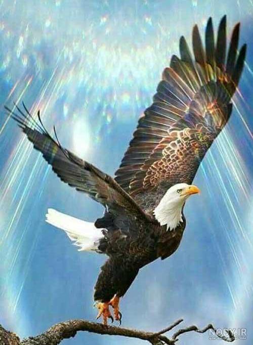 عکس عقاب واقعی