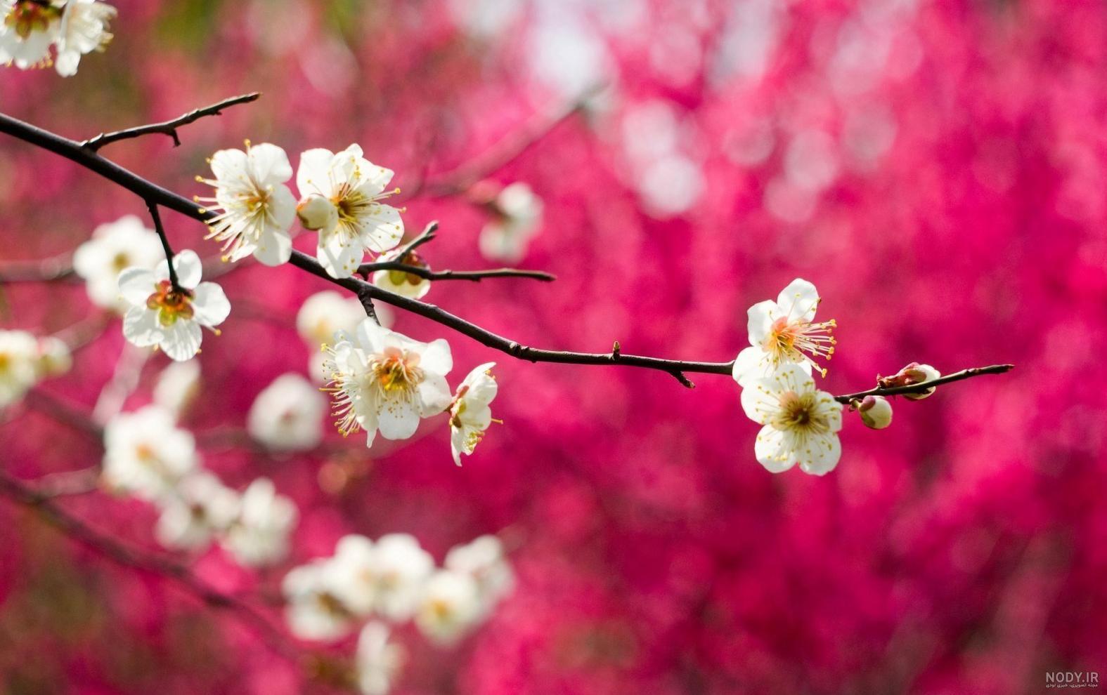 عکس بهار با کیفیت