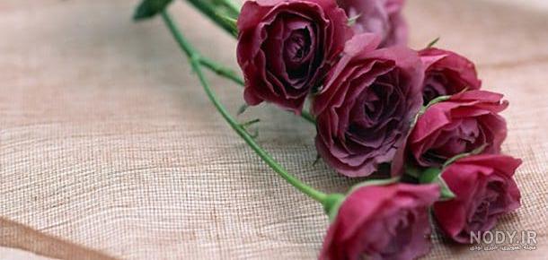 عکس گل برای پروفایل شاد