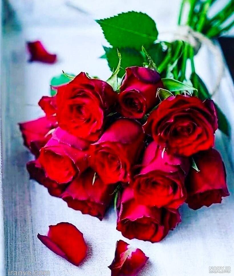 عکس گل رز زیبا جدید