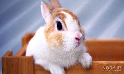 عکس یک خرگوش زیبا