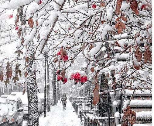 عکس زیبا پروفایل زمستان