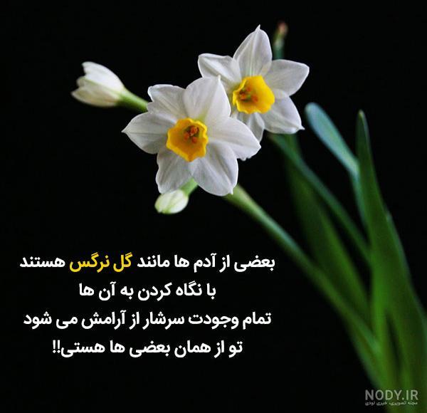 عکس نوشته صبح بخیر گل نرگس