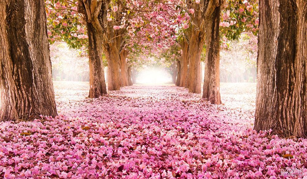 عکس طبیعت برای پروفایل