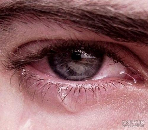 عکس گریه چشم قهوه ای