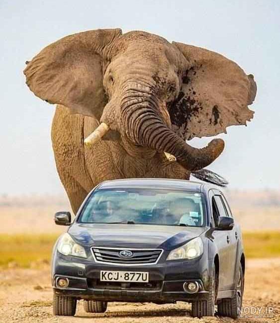 عکس فیل ترسناک