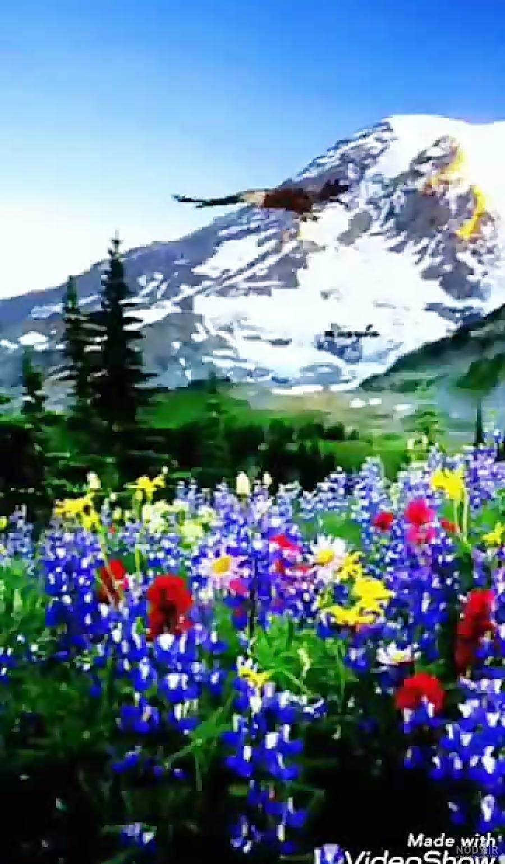 عکس طبیعت زیبا متحرک