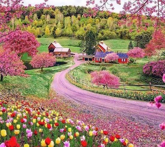 تصاویر منظره گلهای زیبا
