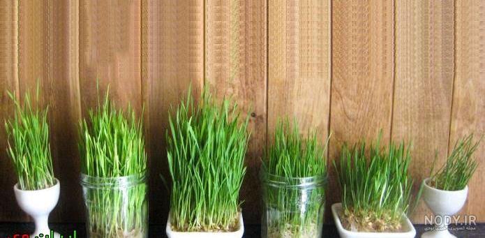 عکس ایده برای ظرف سبزه