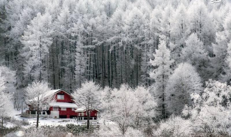 عکس زیبا از طبیعت زمستان