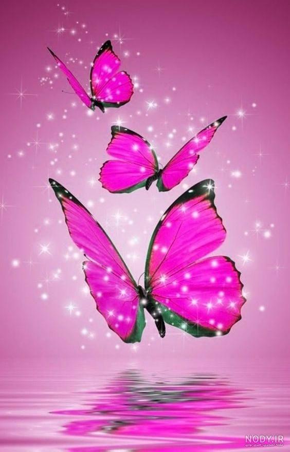 عکس پروانه ی صورتی
