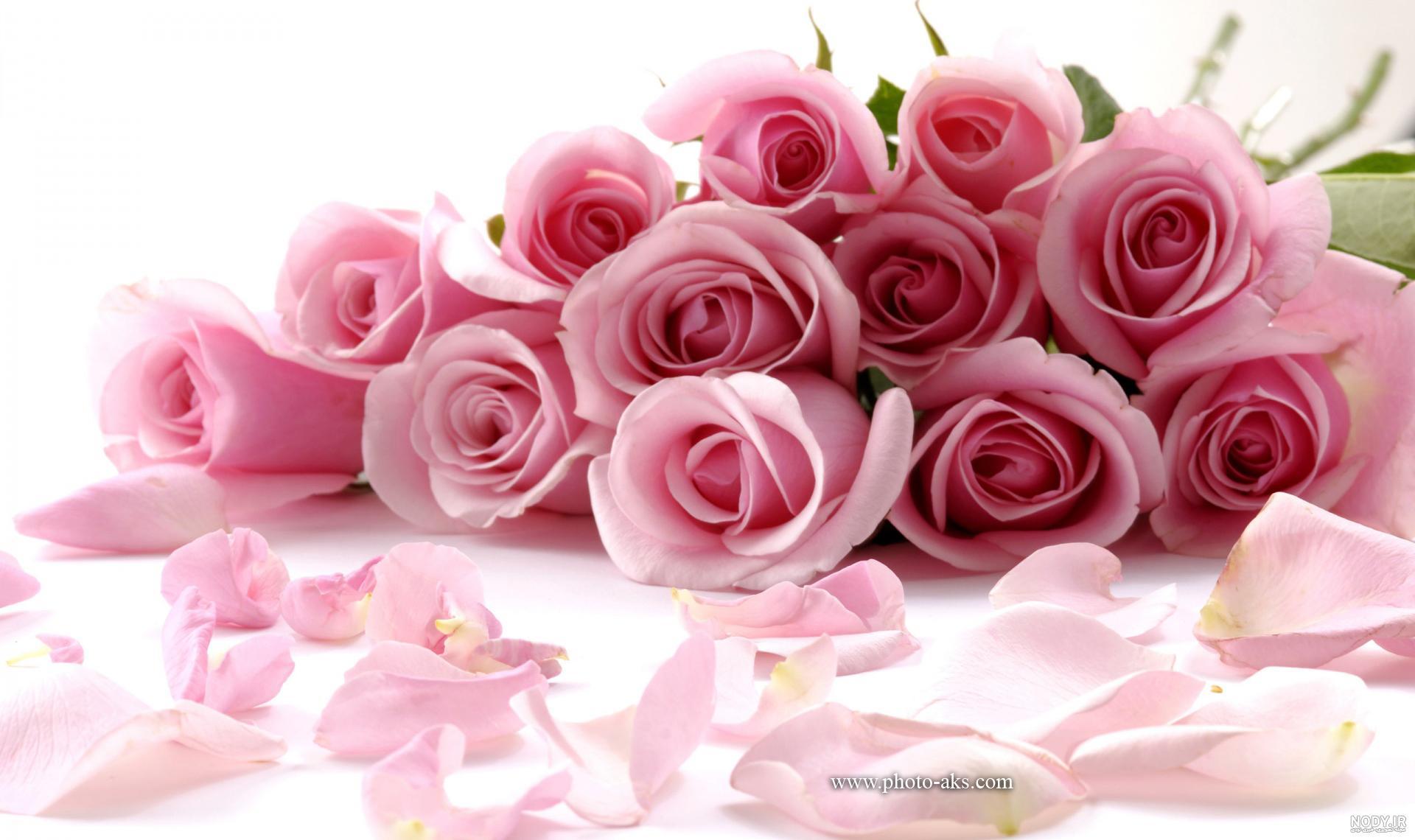 عکس گل رز صورتی زیبا