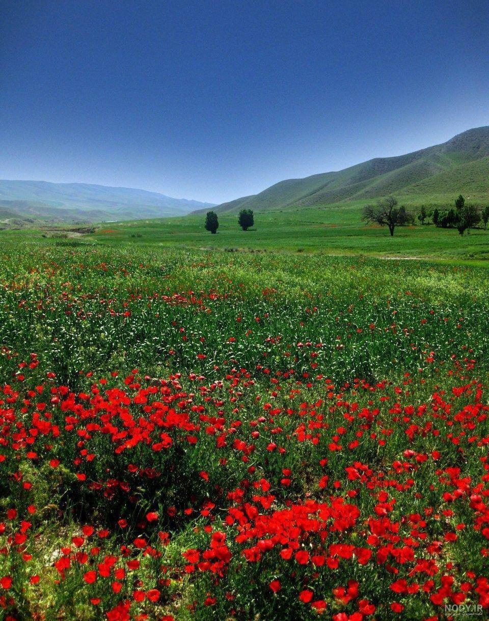عکسهای زیبا از طبیعت ایران