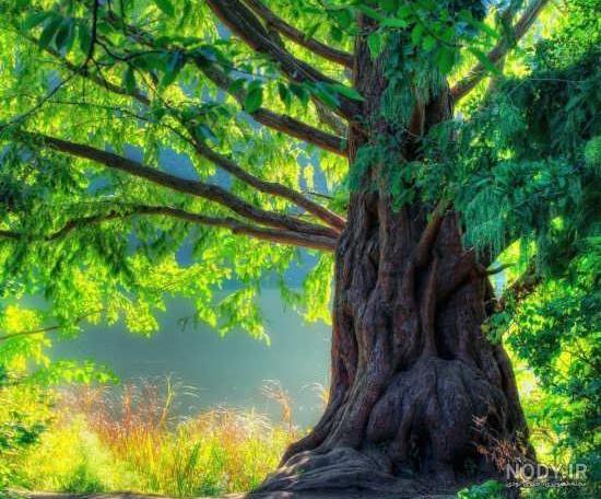 عکس زیبا از طبیعت درخت