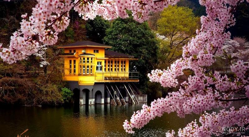 عکس طبیعت بهاری زیبا
