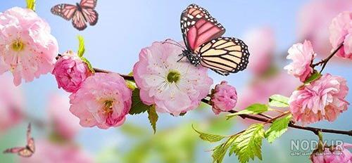عکس طبیعت زیبای فصل بهار