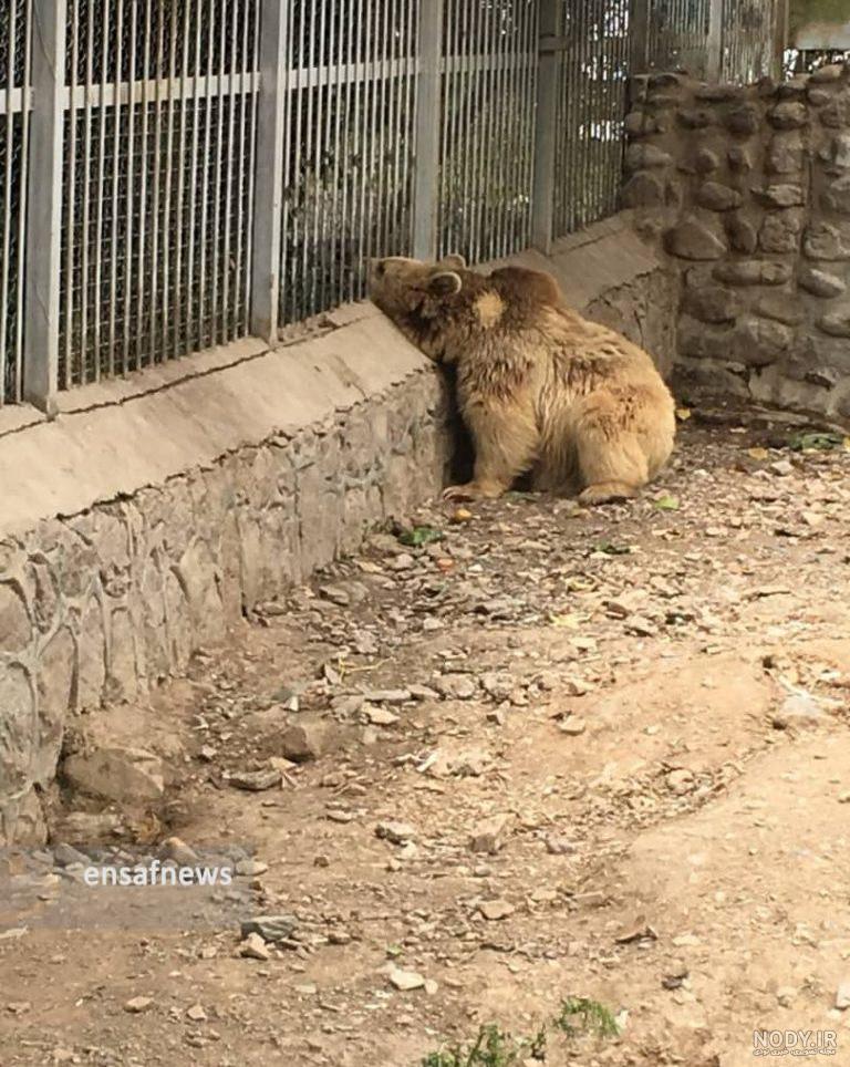 عکس حیوانات پارک ارم