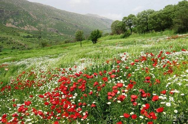 عکس زیبا از طبیعت کردستان