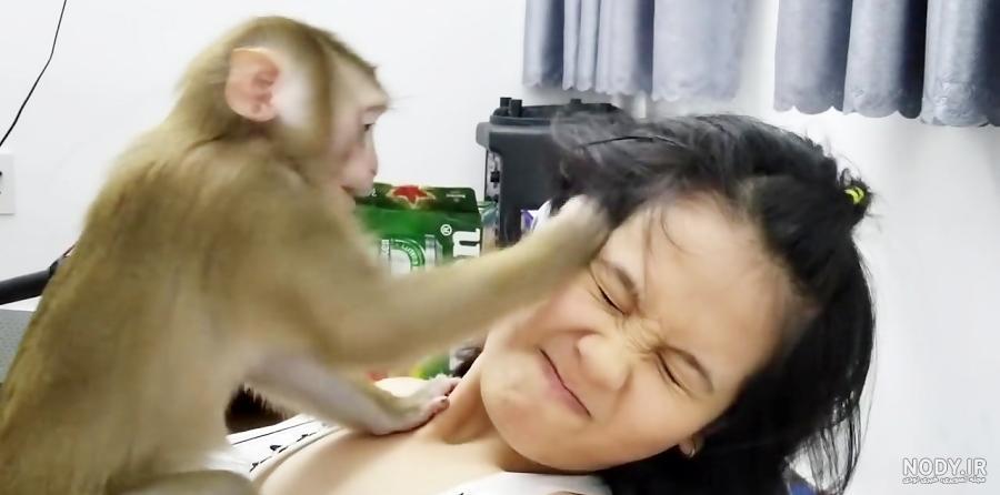 عکس میمون فروشی