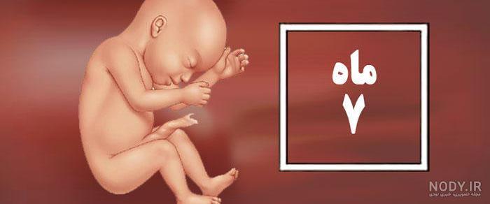عکس جنین پسر هفت ماهه