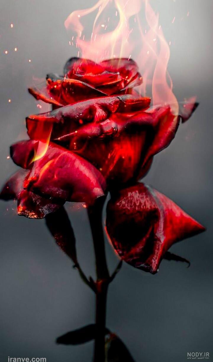 عکس گل غمگین برای پروفایل واتساپ