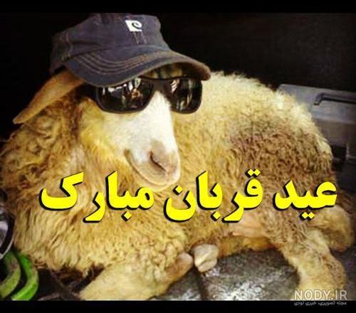 عکس عید قربان طنز