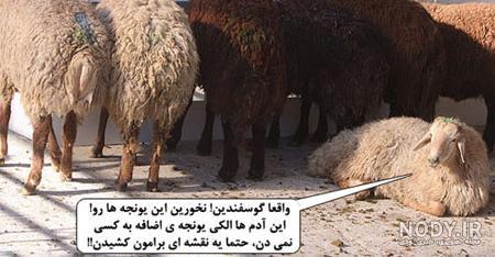 عکس نوشته عید قربان خنده دار