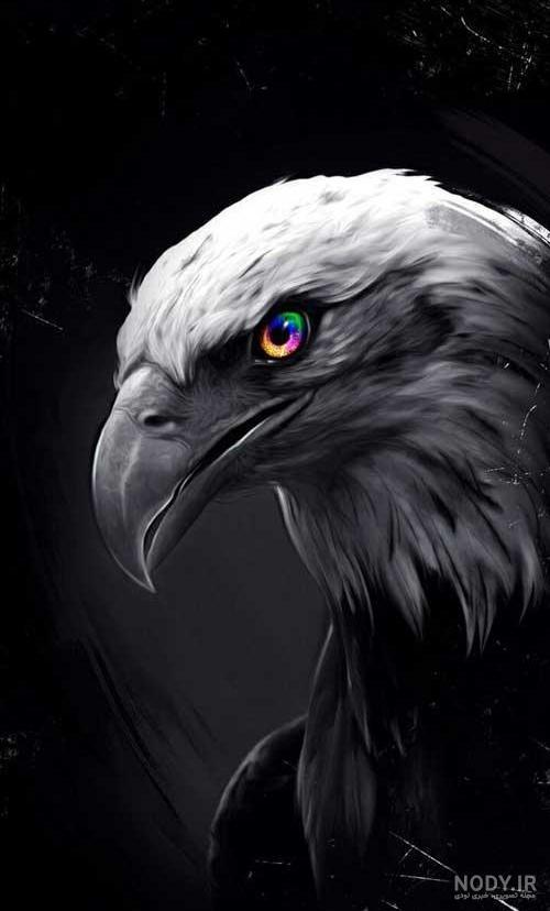عکس عقاب شاخ