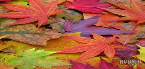 عکس پاییز هزار رنگ