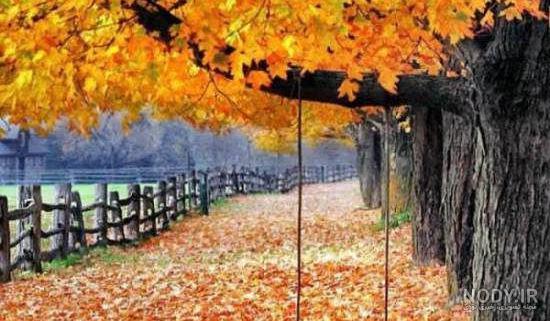 عکس برای پروفایل طبیعت پاییز