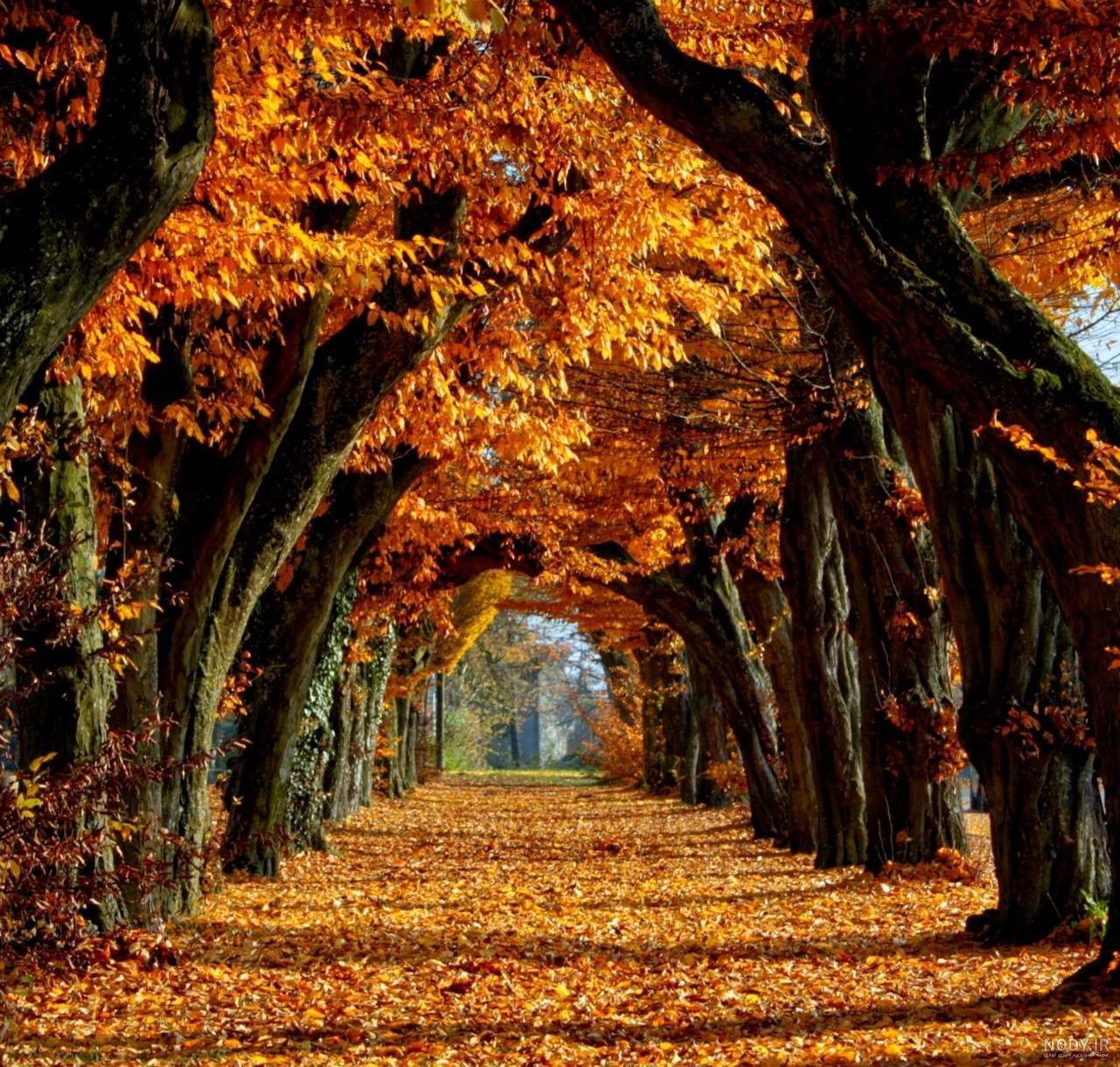 عکس پاییز تصویر زمینه