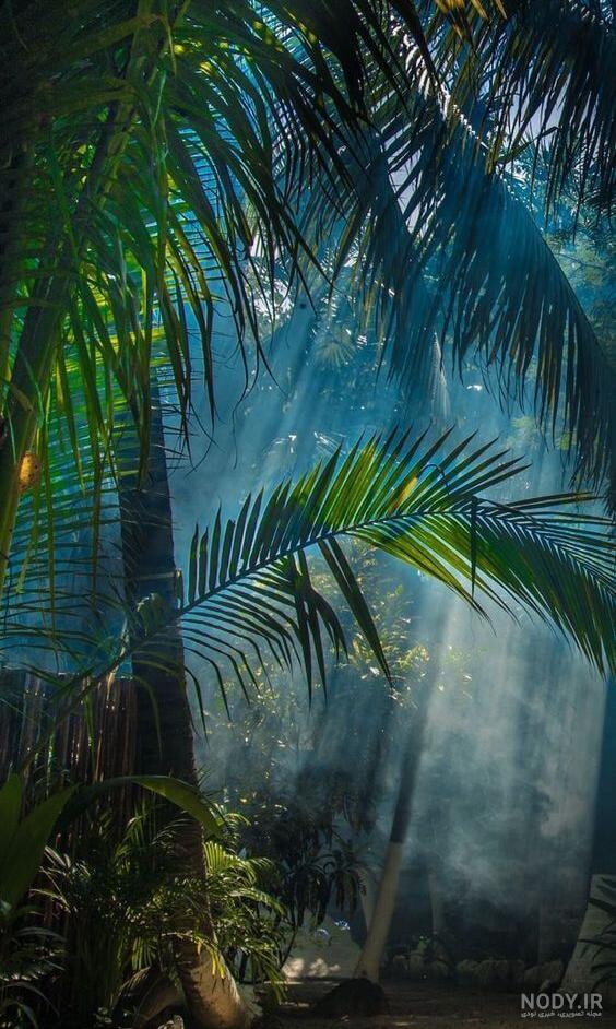 عکس پس زمینه طبیعت برای موبایل