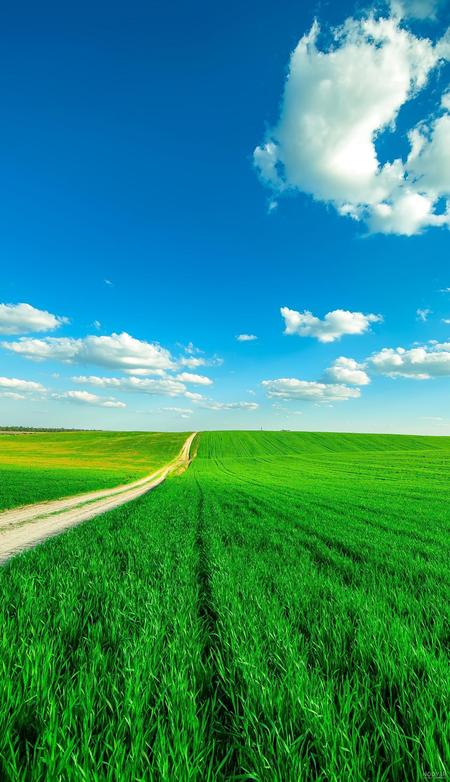 عکس پس زمینه طبیعت سبز